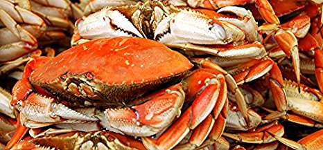 Live and frozen Dungeness Crab (Black and Yellow)