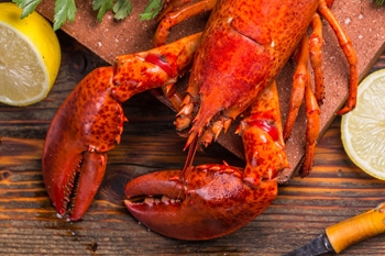 Live and frozen Canadian Lobster