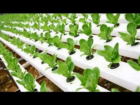 Services Hydroponic Gardening Training From Mumbai Maharashtra India By V R Agritech Id 3583844