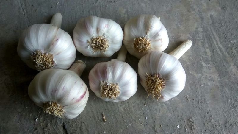 Garlic utie