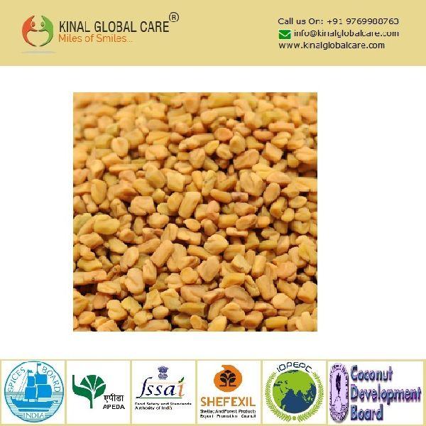 Best Quality Fenugreek Seeds Powder (KGCFSP-003)
