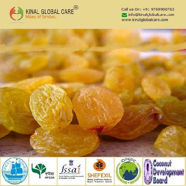 Indian Golden Raisins (KGC-R-112)
