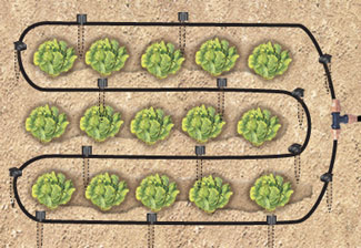 Micro Irrigation System Manufacturer In Ahmedabad Gujarat