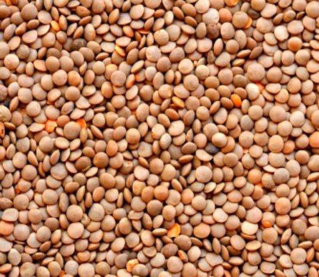 Lentils Seeds