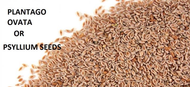 Buy Psyllium Seed From Akash Agro Industries Sidhpur India Id
