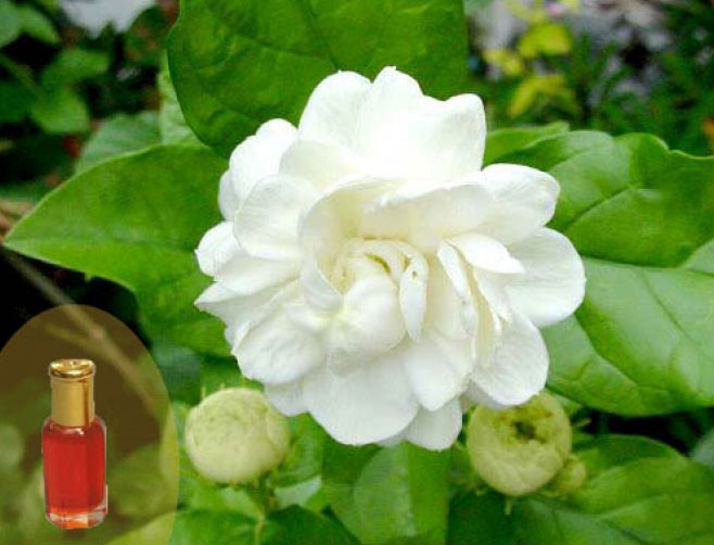 buy mogra attar from m s surya fragrance perfumes bareilly india
