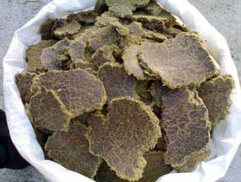 Cotton Seed Cake (BACC 005)