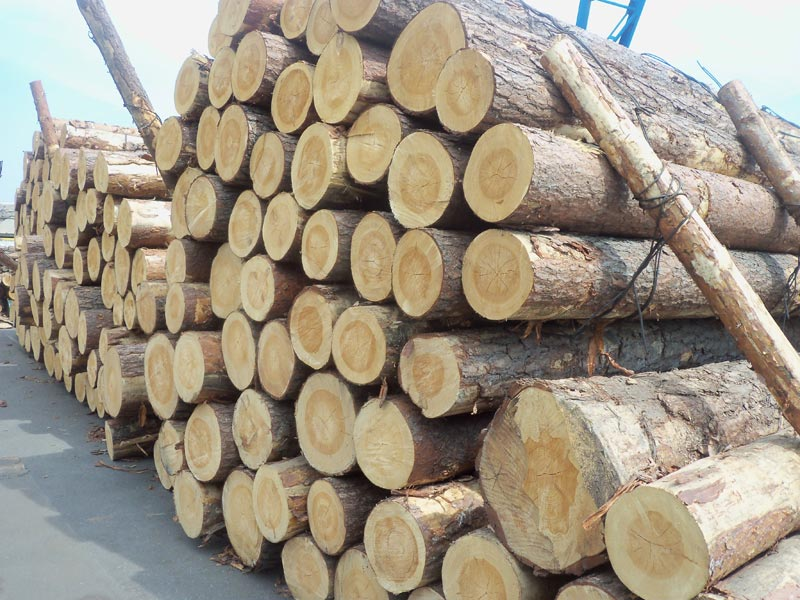 Pine Wood Logs (Radiata Pine Wood Logs)