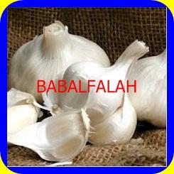 Indian Garlic (BABG)