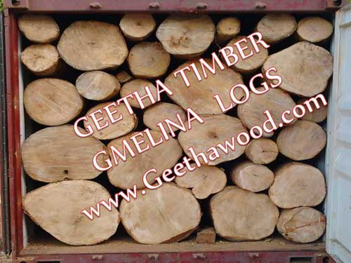 Gmelina Wood Log Manufacturer & Exporters from Dindigul, India