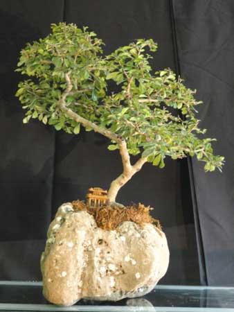 Bonsai Plant (01)