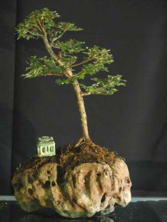 Bonsai Plant (03)
