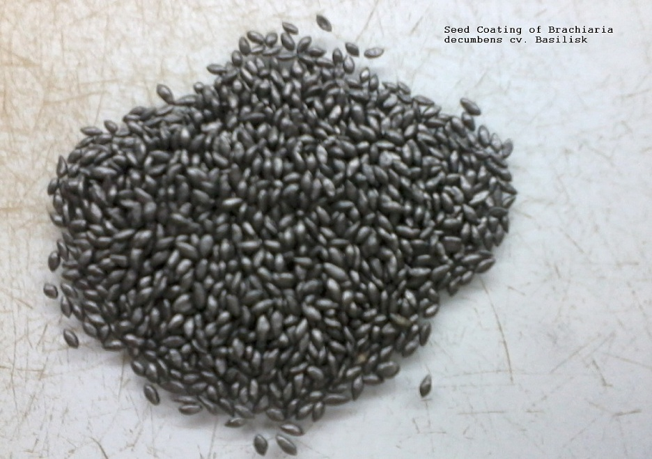 pasture seed coating of brachiaria decumbens cv  basilisk