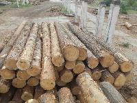pine wooden logs