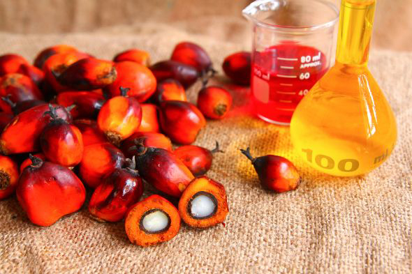 Refined Palm Oil (NA)