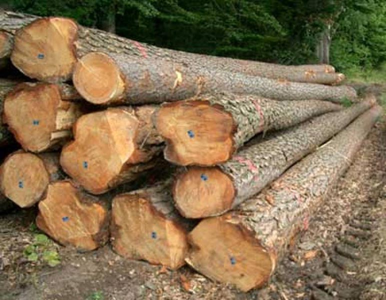 Buy timber wood logs from edgar a s turkey id