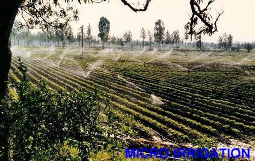 Irrigation Landscape Consultancy Services