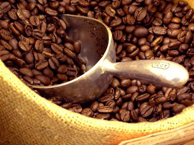Coffee Beans (Doozi P02)