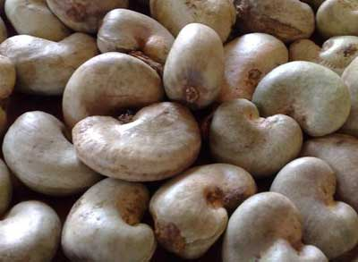 Raw Cashew Nuts (Doozi P01)