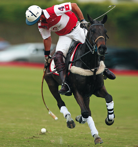 Polo sports team accsesories