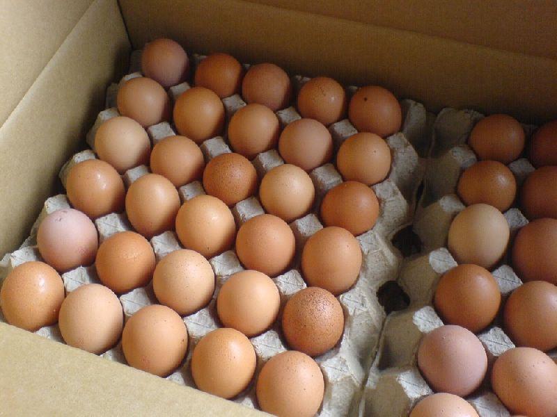 Fresh Chicken Table Eggs/Fresh Chicken Hatching EGGS
