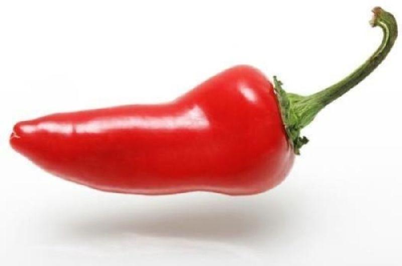 FRESH CHILLI / HOT PEPPER/ RED PEPPER
