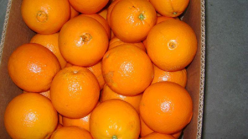 Fresh Orange,Fresh Naval Oranges/Fresh Valencia Oranges