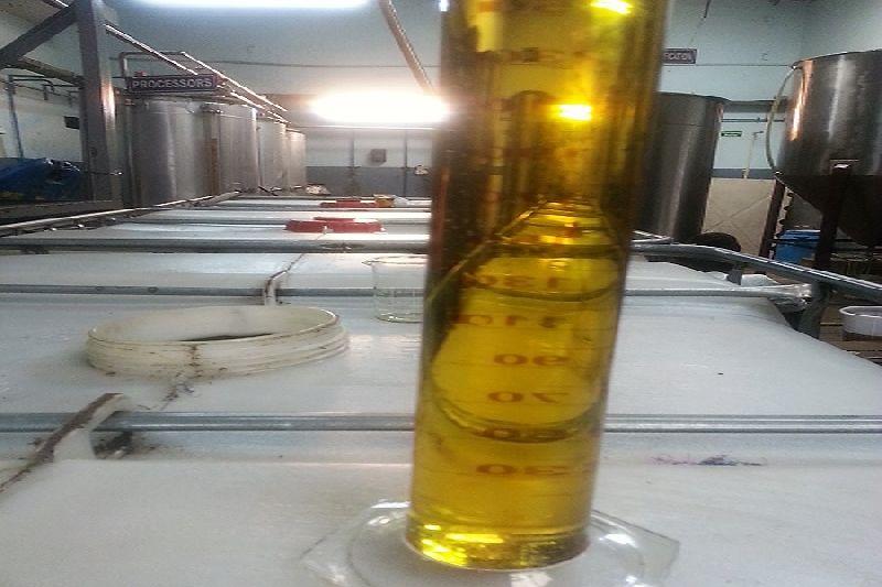 Jatropha Oil and Seed