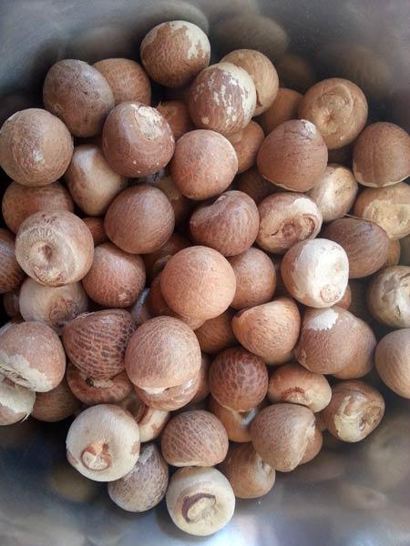 Quality Betel Nuts Whole and Split Slice Betel Nut Dried Betel Nut FRESH/FROZEN/DRIED