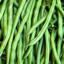 French Bean Seeds