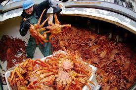 Frozen King Crabs
