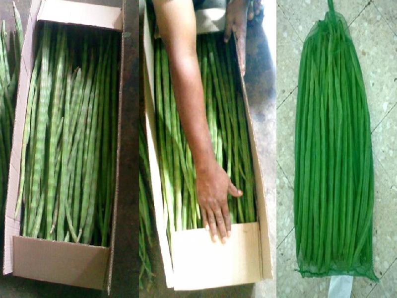Buy Fresh Drumsticks from Priya Global Exports, Chennai