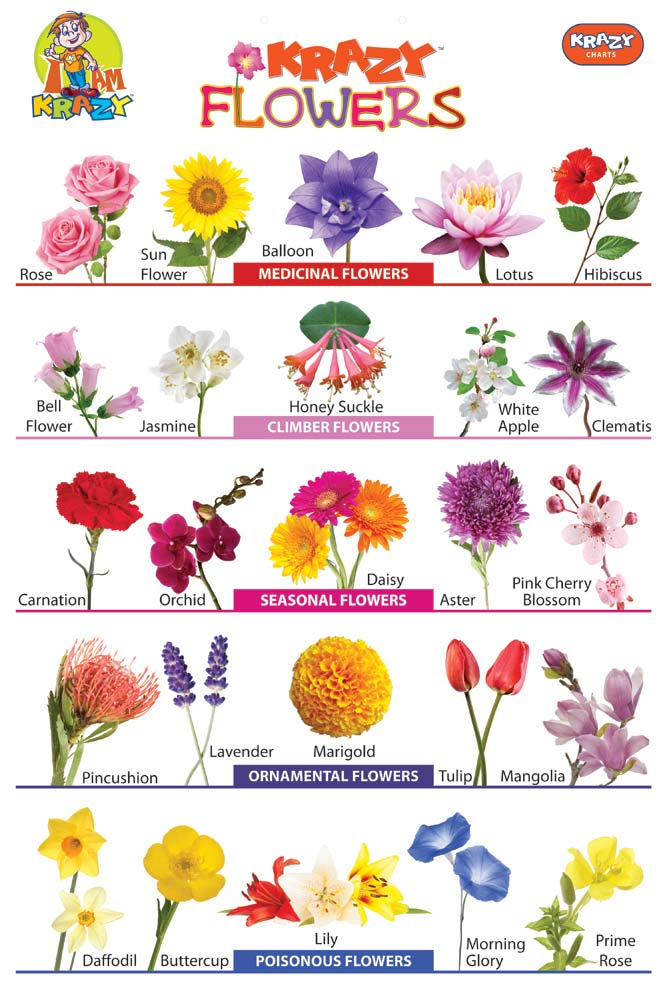 Krazy Flowers Chart Manufacturer \u0026 Exporters from, India