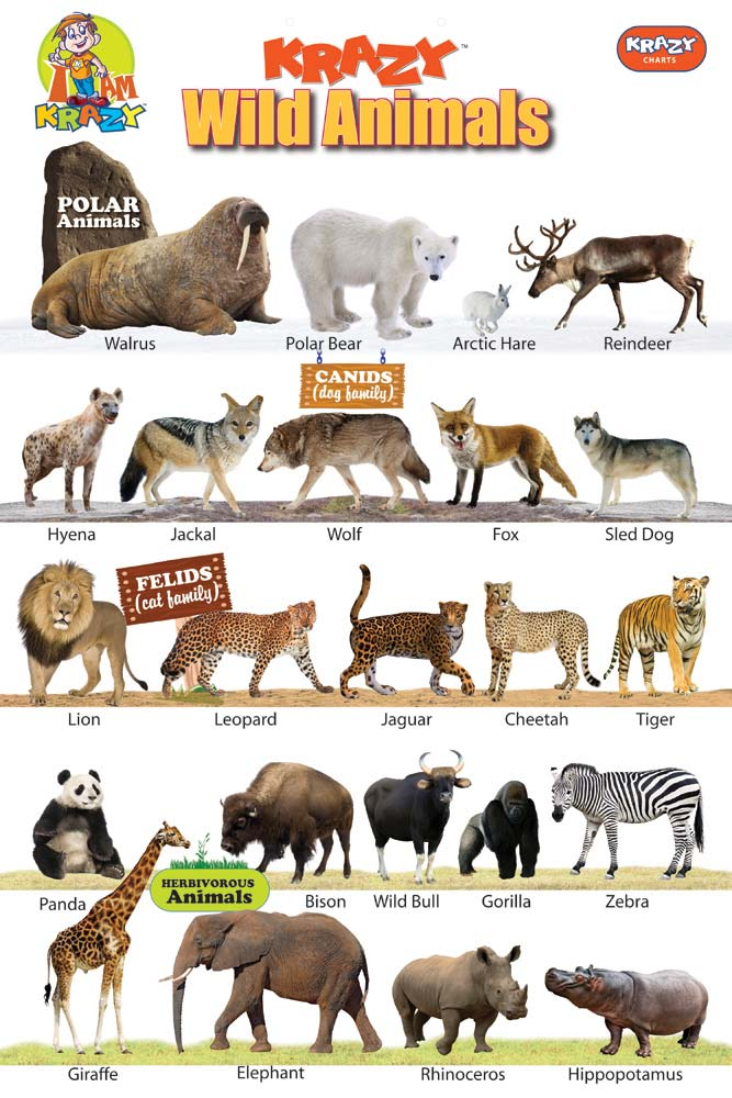 Krazy Wild Animals Chart Manufacturer & Exporters from