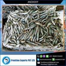 Anchovy Frozen Fish