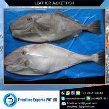 Frozen Leatherjacket Fish