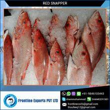 Frozen Red Snapper Fillet Fish