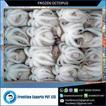 Frozen Sea Octopus