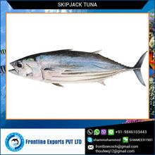 Frozen Whole Round Skipjack Tuna