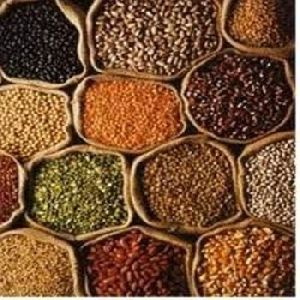 Pulses in Kerala - Manufacturers and Suppliers India