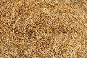 Packed Wheat Straw