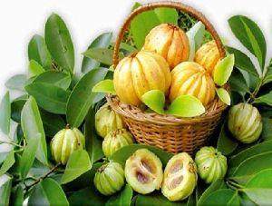 Garcinia Cambogia Extract