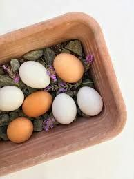 Duke Eggs