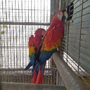 Speaker Scarlet Macaw  Parrot