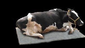 Cow Mat - Modern Dairy Machines
