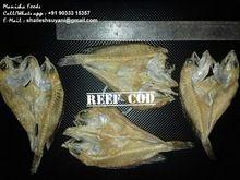 Dry Reef Cod