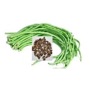Hybrid F1 Green Long Bean Arka Mangala Seeds