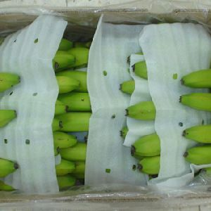 fresh indian cavendish banana