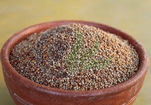 Fresh Millet Seeds