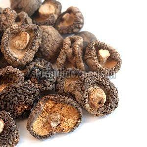 Mushroom at Best Price from Mushroom Suppliers, Wholesalers